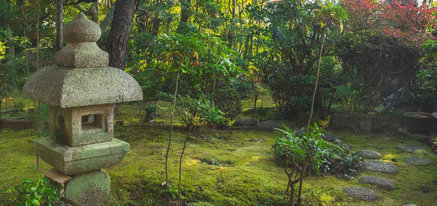 Ditch Your Hard-to-Grow Lawn And Start Cultivating Moss, Instead