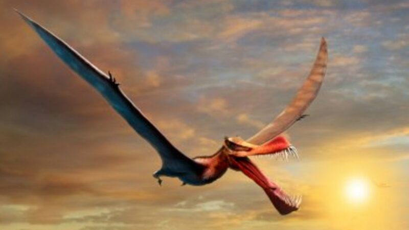 Researchers Identify a 'Fearsome Dragon' With 23-Ft Wingspan That Soared Over Australian Outback